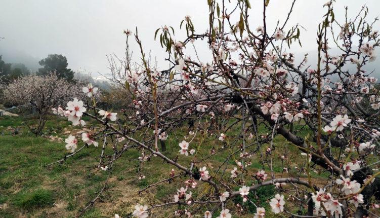 Después de la nieve, la primavera